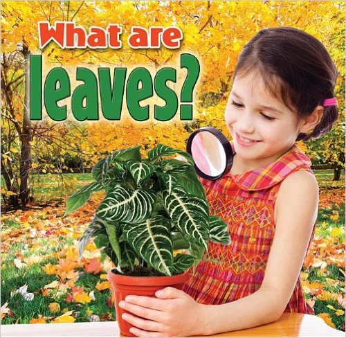 what are leaves